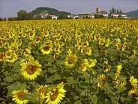 El Gobierno de Navarra abona 47,2 millones de euros a 18.175 agricultores beneficiaros de la PAC