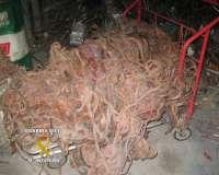 Cinco detenidos por el robo de más de 2.000 kilos de cable de cobre en dos meses