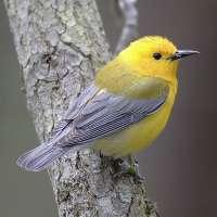 Científicos se reúnen en Vitoria para presentar sus últimas investigaciones en medio ambiente y ornitología