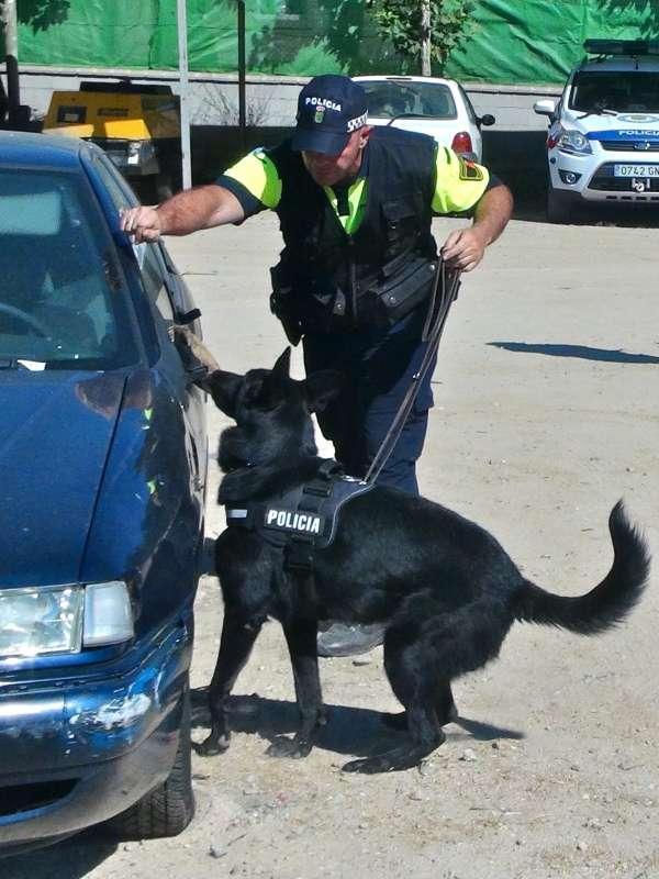 Policías locales de toda España se formarán en Badajoz en un curso de guías de perros detectores de estupefacientes