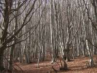 Pueblos de la Catalunya interior lanzan la marca 'Bosques de Brujas y Bandoleros'