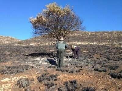 Imputado como presunto autor de un delito de incendio forestal tras encender una barbacoa