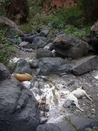Detenido en Tenerife por arrojar perros vivos a un barranco
