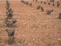Agricultores y ganaderos extremeños se movilizan en Madrid para