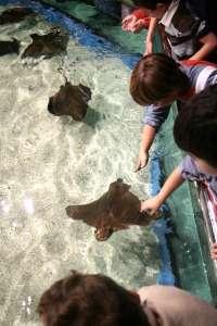 Consejo de administración del Aquarium empleará fondos de los socios para abonar las facturas de electricidad