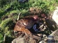 Ayuntamiento de Punta dice que no se ha vuelto a autorizar ninguna acción contra los perros y busca alternativas
