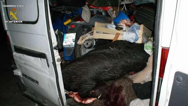 Intervienen seis plantas de marihuana y tres cerdos muertos dentro de una furgoneta