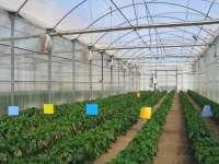 Agricultura investiga cómo paliar el efecto del azufre sublimado en los materiales de cubierta de los invernaderos