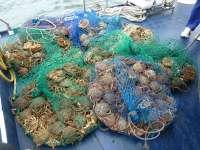 Requisada casi media tonelada de pescado y marisco y 117 aparejos en operativos contra el furtivismo en Galicia