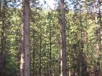 El Gobierno murciano atenderá más del 90% de las alegaciones presentadas a la planificación ambiental del Noroeste