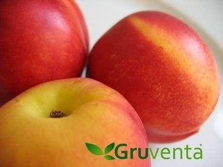GRUVENTA prevé una campaña de fruta de hueso murciana marcada por la internacionalización y una óptima calidad