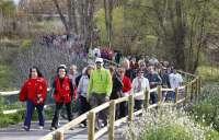 Récord de participación en el primer Paseo Saludable 2013 'Calzada Romana del Iregua'