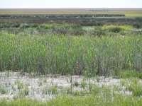 Ecologistas, satisfechos con Delibes para presidir el Consejo de Doñana, le piden