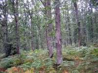 Los parques naturales de Gorbeia y Valderejo (Álava) renuevan por tercera vez la certificación del Ekoscan