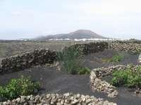 Ratificada la ilegalidad de la construcción de viviendas en el Paisaje Protegido de La Geria (Lanzarote)