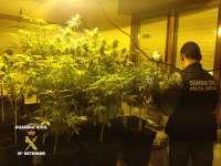 Detenido un joven por tener una plantación 'indoor' de marihuana en su domicilio de Castro Urdiales