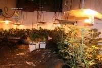 Detenido un hombre que se atrincheró con un arma de fuego al ser sorprendido en una plantación de marihuana