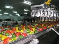 Las exportaciones hortofrutícolas incrementan un 3% su valor y un 8% su volumen en enero y febrero de este año