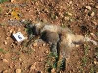Tres detenidos por utilizar cebos envenenados en un coto de caza de El Robledo (Albacete)