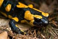 El Museo de la Naturaleza y el Hombre acoge una conferencia sobre la fauna en zonas remotas del mundo