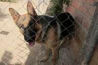 El Centro Municipal de Protección Animal organiza varios actos para alentar a la adopción