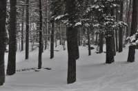 Alerta amarilla por nieve en la provincia de Teruel