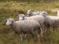 La Comisión Europea reconoce a Euskadi como región libre de brucelosis bovina, ovina y caprina