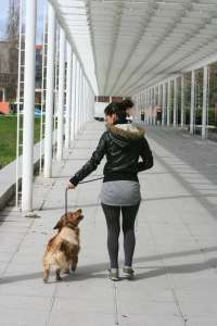 Una campa�a sensibilizar� sobre la importancia de la prevenci�n de enfermedades que transmiten los insectos a mascotas