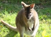 Jumpi y yago son los nombres elegidos para las dos crías de marsupial nacidas en el Parque del Oeste de Málaga