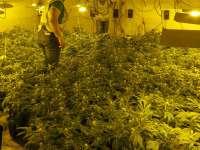 Intervenidas 242 plantas de marihuana en una nave industrial y detenidas cuatro personas