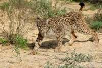 WWF exige nuevas medidas frente a la