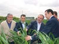 Agricultura cifra en 41.766 las hectáreas dañadas por el pedrisco en cinco comarcas