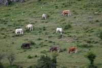 El Parque Natural Sierra de Cebollera programa un paseo para describir el monte en la piel de los trashumantes