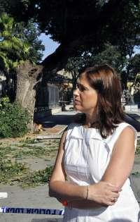 Una rama de 20 metros y 400 kilos de un árbol podrido se desploma en el Parque de Gasset de Ciudad Real