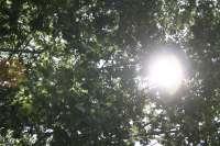 Las altas temperaturas continuarán el lunes y dejarán 22 provincias en alerta por calor, entre ellas las cuatro gallegas