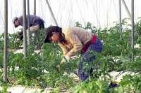 El último bienio fue el más favorable desde la segunda mitad de la década de los 90 en la agricultura murciana