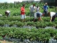 Las Escuelas de Capacitación Agraria donan 11.000 kilos de frutas y hortalizas a ONG canarias