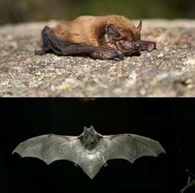 Cebollera acoge este sábado una actividad relacionada con la Noche Internacional de los Murciélagos