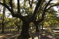 Ecologistas alertan de que la Ley de Parques Nacionales abre la puerta a la caza y a actividades de parques temáticos