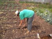 CyL ha perdido 7.675 cotizantes a la Seguridad Social por el ejercicio de la actividad agraria, según UCCL