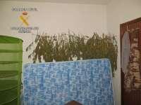 Detenida una persona por cultivar en su casa de Hontanaya (Cuenca) 10 plantas de marihuana