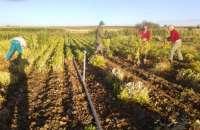 Asaja CyL condiciona la pervivencia de producciones autóctonas de legumbres a la obtención de un precio justo
