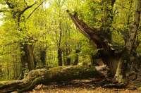 Gobierno vasco ratificará este miércoles en Txingudi (Gipuzkoa) la 'Carta de la Biodiversidad de Euskadi'