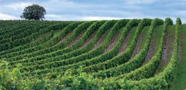 Diputación concede 85.000 euros a la Ruta del Vino de Rioja Alavesa para la promoción del turismo y la economía de Álava