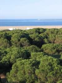 El pleno de Moguer aprueba presentar alegaciones al plan del Corredor del litoral