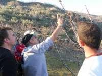 Un curso abordará en Garganta la Olla (Cáceres) el cultivo ecológico del cerezo