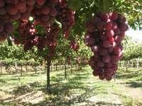 Técnicos de Cicytex asisten en Logroño a un foro de colaboración público-privada sobre viticultura y enología