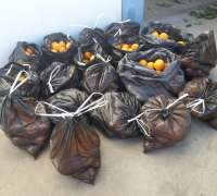 La Policía Local de Carmona decomisa 250 kilos de naranjas robadas y las dona a un convento
