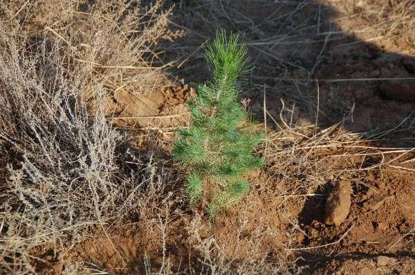 Escolares de Fraga plantan 300 árboles en la Sierra de la Concepción