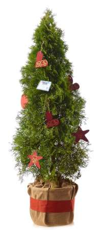 Unos 300 árboles navideños con mensajes solidarios decorarán las calles y locales comerciales de Cáceres